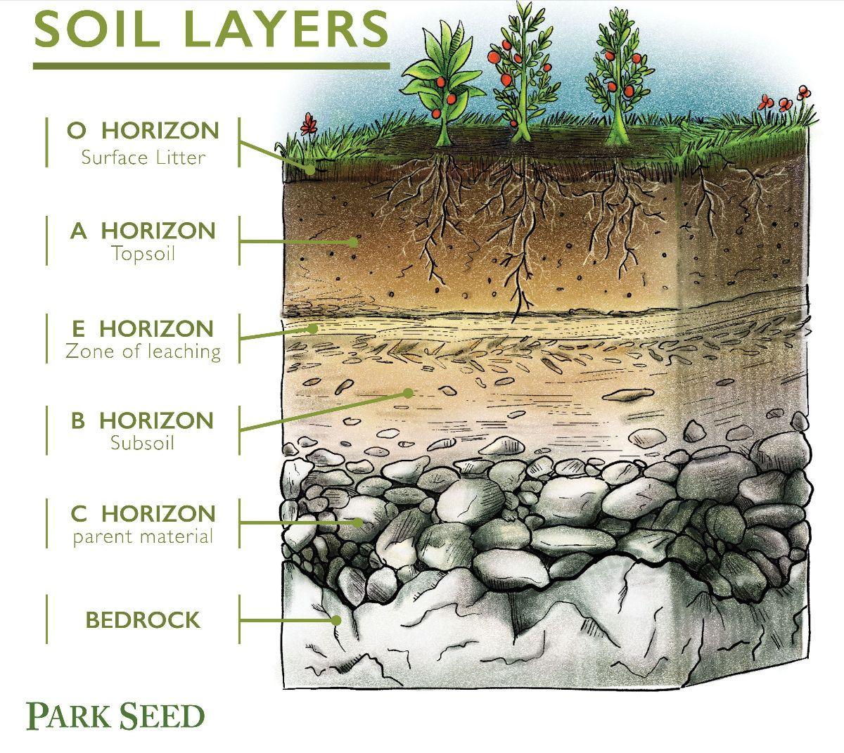 soil horizon layers