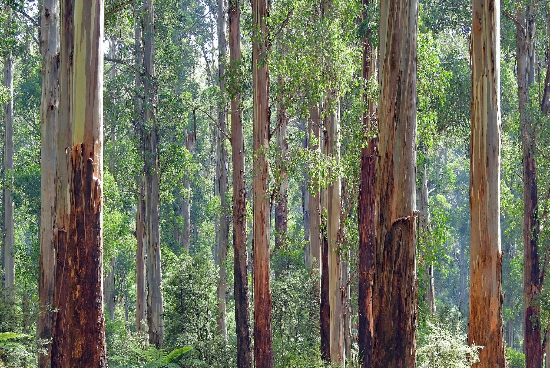 10 Dead and Critical Factors Behind Why We Need Native Species in Agroforestry