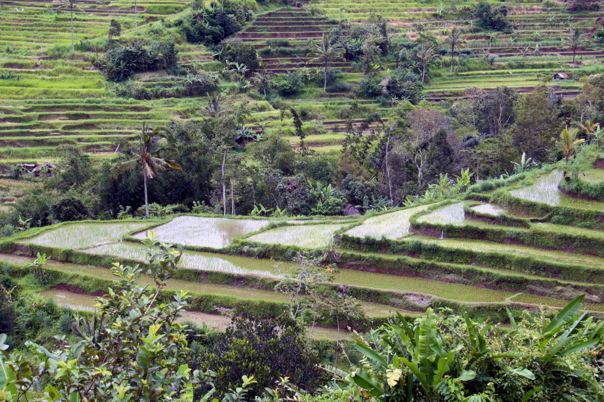 agroforestry community