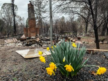 Paradise Camp Fire wildfire Tetra Tech disaster recovery arborist drone mapping Benoit Clement