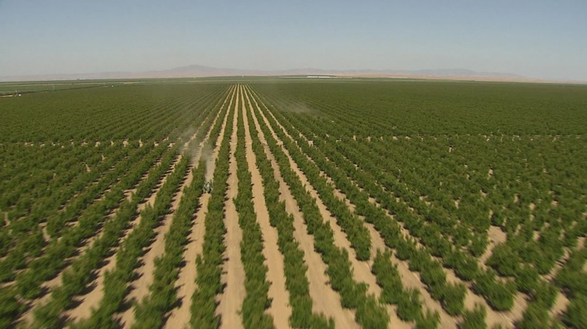agroforestry carbon sequestration california central valley orchard high