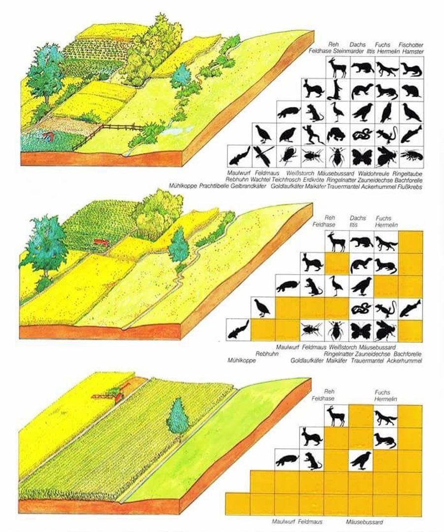 ecosystem tree land use