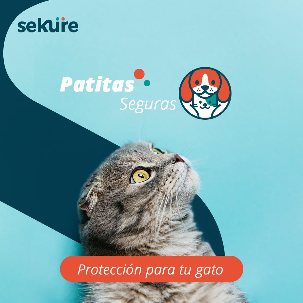 Patitas Seguras Gatos